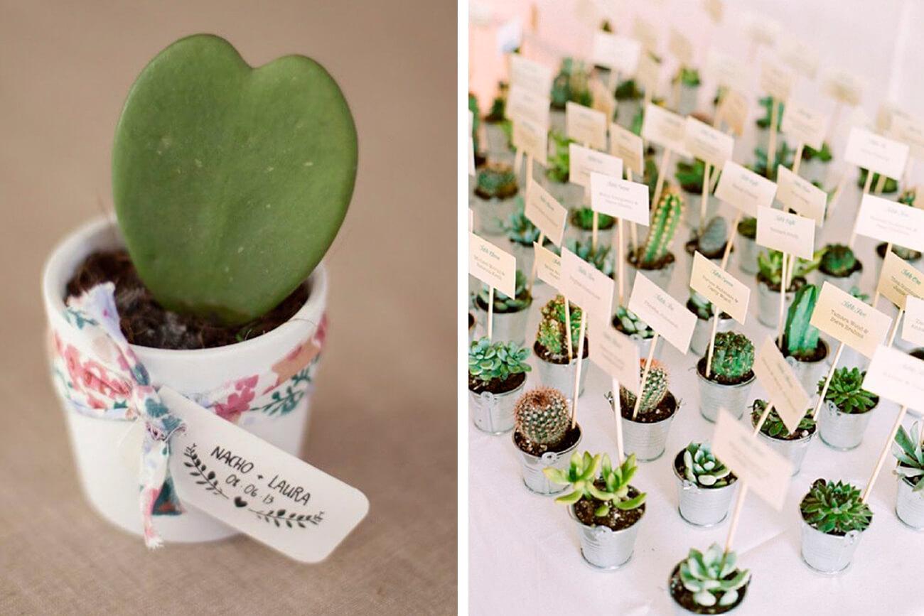 decoracin con cactus
