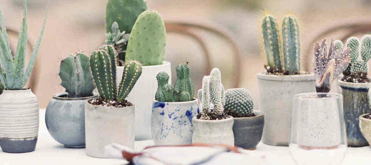 Decoraci n con cactus for Cactus decoracion